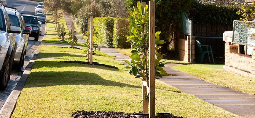 Tree planting city of newcastle council has identified tree planting as an important component in achieving the goals of the urban forest policy pdf in particular to sustain and expand spiritdancerdesigns Choice Image
