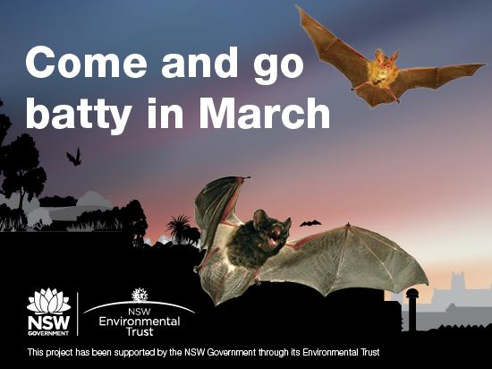 Go batty with microbats this month